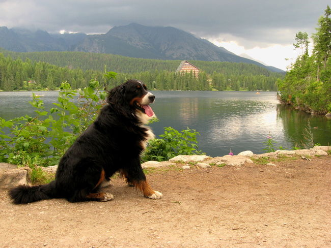 Dog Pets One Animal Lake Water Domestic Animals Nature Outdoors Bernese Mountain Dog SrnkaAnimals Scenics Strbske Pleso Slovakia EyeEmNewHere Nature Landscape Scenic Scenery SrnkaScenery