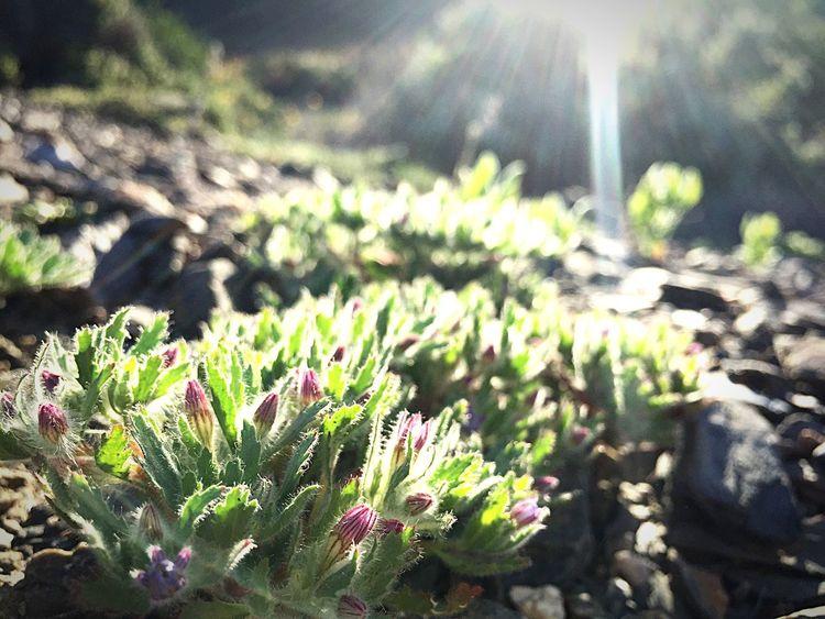 La luz del crecimiento...