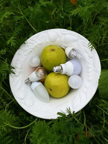 Obstschale mit LED-Früchten Energy Efficient Lightbulb Energy Efficient LED Led Lights  LED Light Pear Fruits Obstschale Obst Tradition Plate High Angle View Cultures Dessert Close-up Sweet Food