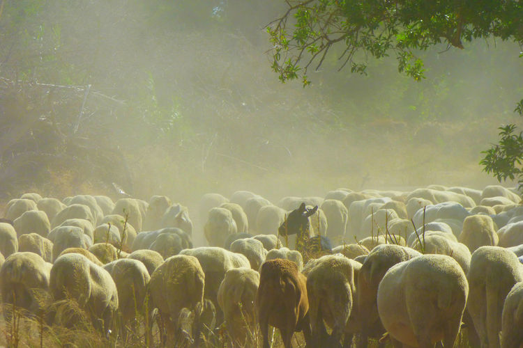 Animal Themes Beauty In Nature Day Domestic Animals Flock Of Sheep Flock Of Sheeps Growth Landscape Large Group Of Animals Livestock Mammal Nature Outdoors Real People Sheep Sky Tree