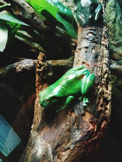 Frog Animals In The Wild Animal Wildlife One Animal Animal Themes