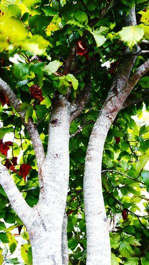 Tree Leaf Low