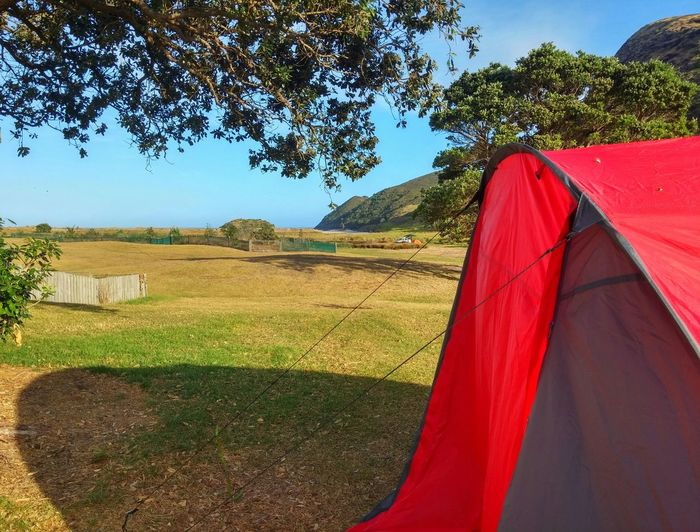 Everybody has their own ideals on what complete satisfaction is. This photo reflects mine. 😍 Waking up and crawling out of my tent, to hear the cicadas singing, see the waves crashing a short distance away. Knowing its gonna be a gorgeous hot day. This is it. Unapologetically😍 Red Live For The Story Kapowairua New Zealand Spirits Bay New Zealand Piwhane Respect And Enjoy😍 Travel Destinations Summer NZ Style Beauty In Nature My Country Is Beautiful Perfect Weather White Sand New Zealand White Sand Blue Sea Cielo Blu My Favorite Beach Love💏 Scenics Vacations Hot Day Holiday Getaway Surf Waves My Complete Satisfaction Shade Unapologetically