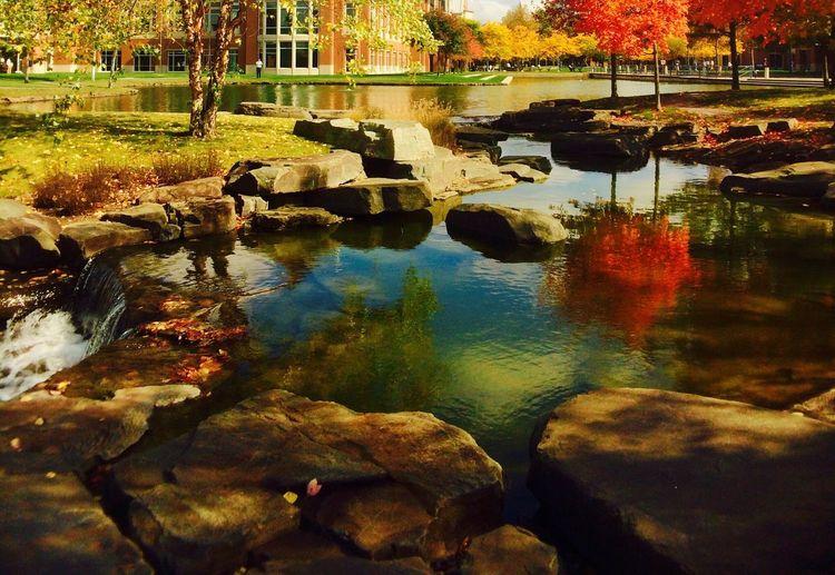 Fall Beauty Snapseed EyeEm Landscape Fall Colors Water Reflections Pennington NJ IPSScenery IPS2015Fall