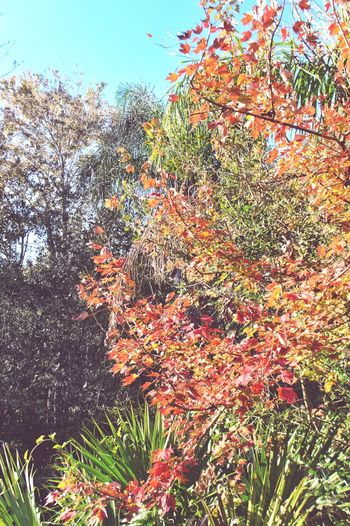 Cool Warm Softness Leaves Growth Nature Outdoors No People Beauty In Nature Tree Colors Colors Of Autumn