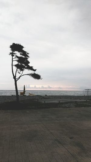 Boulevard Beach Tree Horizon Over Water Tranquil Scene Calm Atmospheric Mood Tranquility Sea Weather