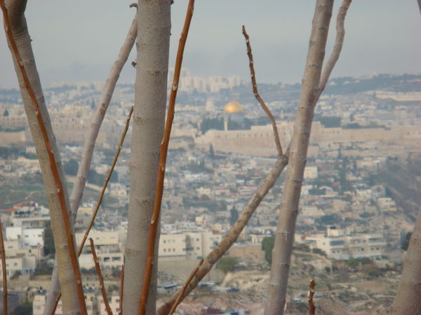 Dome Of The Rock Jerusalem Religious Sites Through The Trees