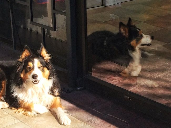 Sunbathing Urbanphotography Light And Shadow Streetphotography Dog Sunbathing☀ Taking Photos IPhoneography