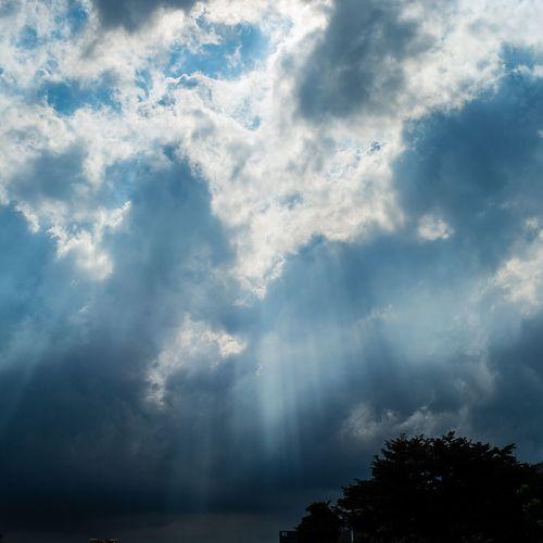 Tree Sky Cloud - Sky