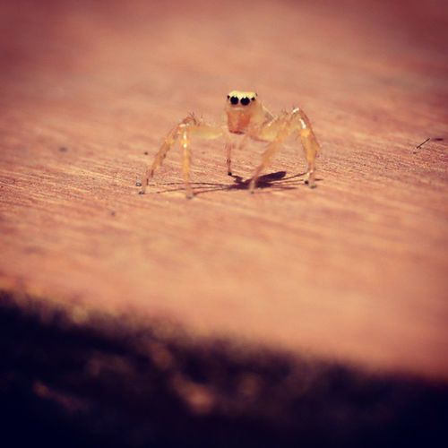Fun fact : after spiders mate the female ones eat the make male ones. Ouch Afterworkoutsnack