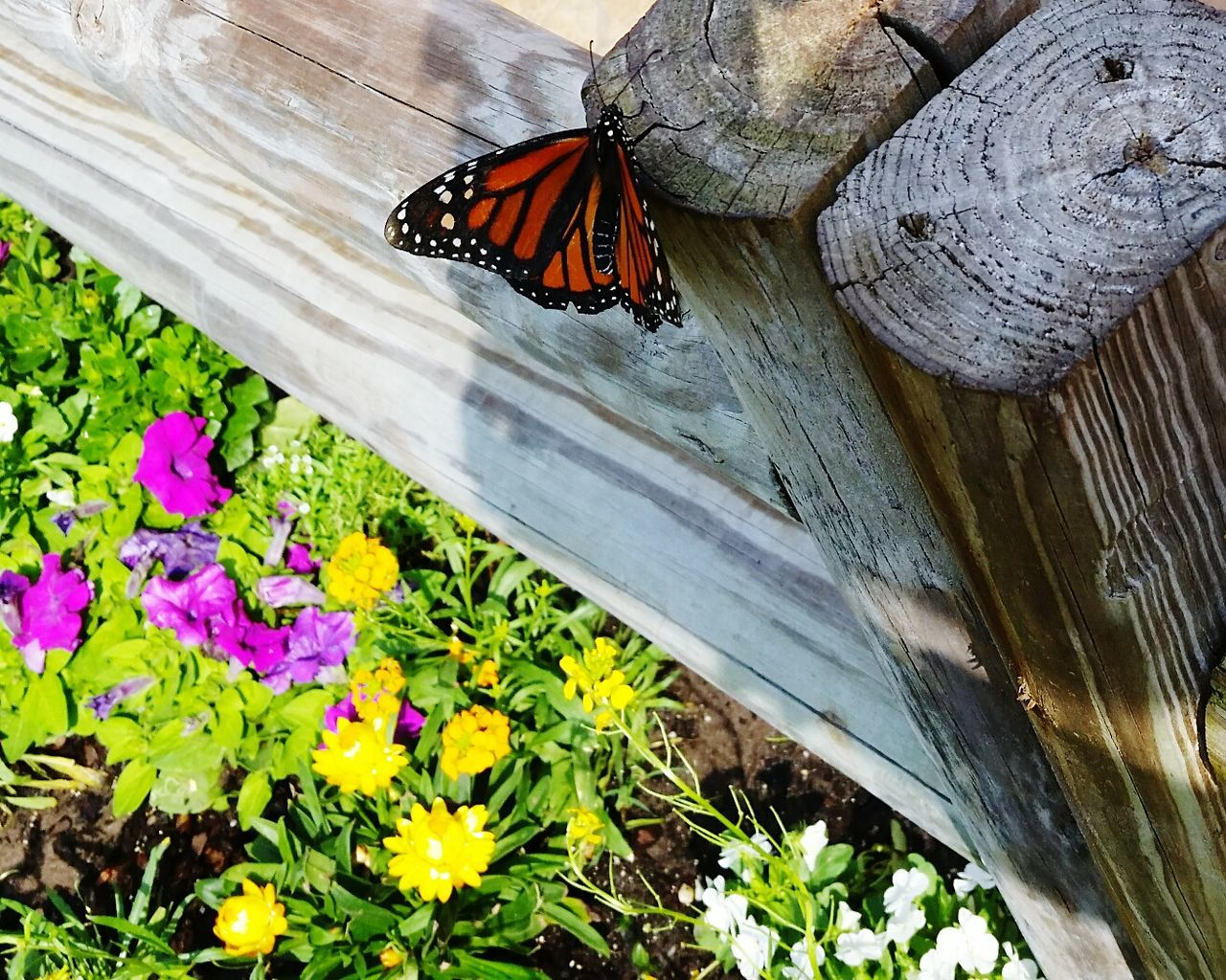 butterfly - insect, insect, flower, animal themes, one animal, nature, fragility, no people, growth, day, outdoors, beauty in nature, plant, animals in the wild, close-up, freshness, flower head