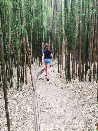 Full Length Rear View Of Girl Walking Amidst Bamboo Trees In Forest