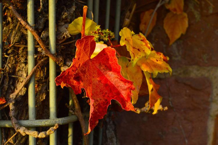Autumn Bokeh Golden Light Leaves Nature Relaxing Season  Yellow