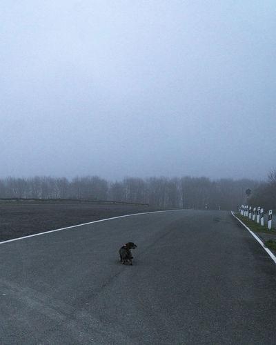 Dog on road against sky