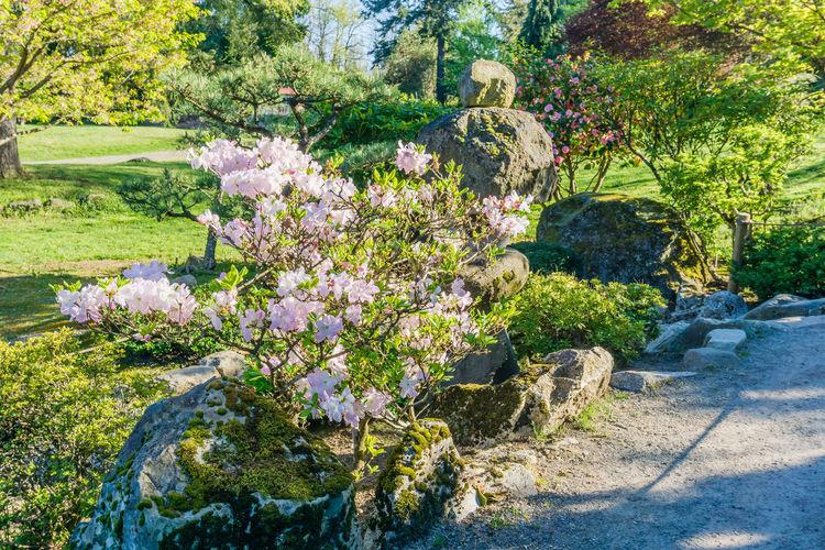 View of flowering plants in park