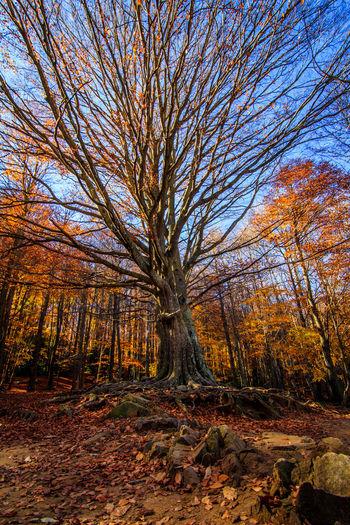 Autumn photography workshop in Santa fe del montseny. : ) Autumn Catalonia Catalunya Fall Leaves Montseny Orange Otoño Santa Fe Del Montseny Tardor Trees Yellow