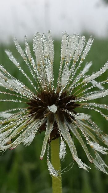 Morning dew Foggy Morning Taking Photos TheVilleAtEyeem Good Things Come In Small Packages With Lightcase
