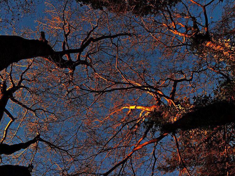 おはようございます☀️ Good Morning Hagging A Tree EyeEm Nature Lover Hanging Out IPhoneography Captured By Iphone Morning Light Light And Shadow Eye4photography  Beautiful Nature