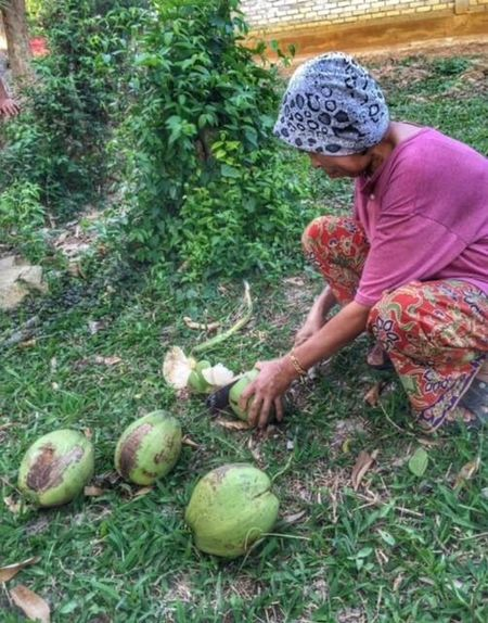 mengharap pada yang sayang , menumpang kaseh pada yang rindu Rindu Mission Mystery Coconut Coconut Drink Drink Kakak Food Working Digging Growth One Person Agriculture Plant Nature Day Occupation People Outdoors Freshness Adults Only Adult One Man Only Nature Asian Culture Malaysia