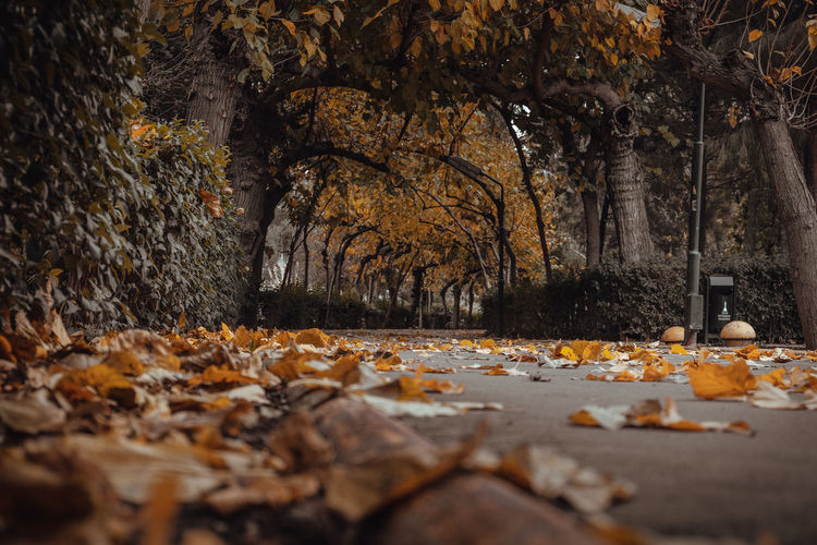 Fallen leaves on street by trees during autumn