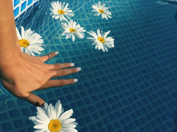 Flower One Person Petal Fragility Swimming Pool Low Section Human Body Part Flower Head Beauty In Nature Real People Outdoors Women Lifestyles Freshness Close-up Day Human Leg Nature Human Hand Water IPhoneography IPhone Photography Second Acts