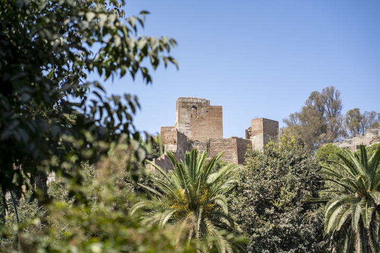 Alcazaba de Malaga Alcazaba De Malaga Malaga View Ancient Ancient Civilization Architecture Building Building Exterior Built Structure Clear Sky Day Green Color Growth History Nature No People Outdoors Park Plant Sky The Past Tourism Travel Travel Destinations Tree