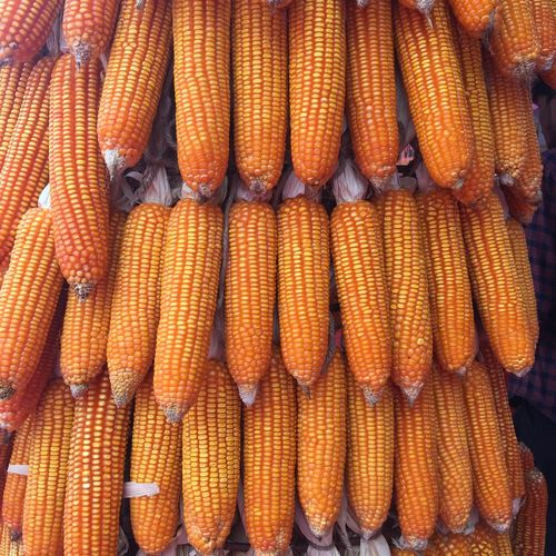 Full Frame Shot Of Stacked Corns For Sale