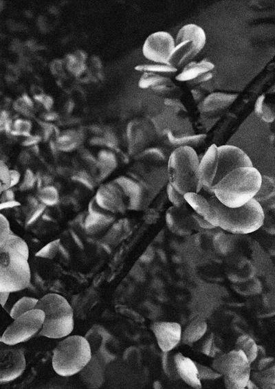 B & W - Garden Taking Pictures Choatephotos Urban Exploration Urban Gardening Garden Mobilephotography IPhone Photography IPhoneography Garden Plant Blackandwhite Photography Blackandwhite The Graphic City