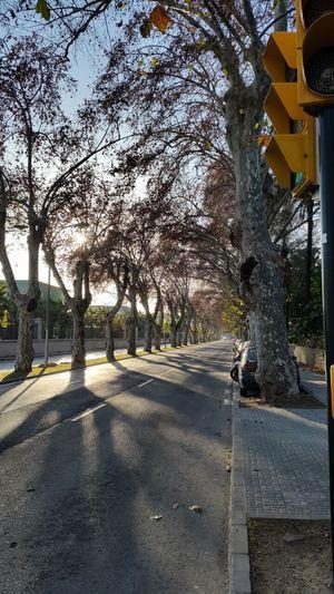 Andalucía Architecture Building Exterior Day España Malaga No People Outdoors Sky SPAIN The Way Forward Tree