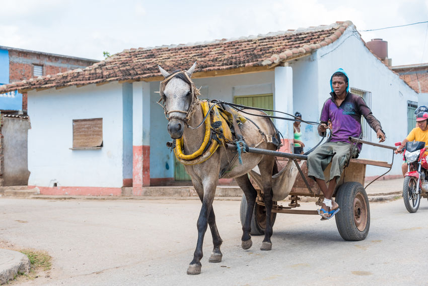 Caribbean Carriage City Communism Cuba Cuban Drawn Every Day Everyday Horse Horse Drawn Carriages Images Lifestyle Matanzas Mean Mode Of Transportation People Population Revolution S Scenes Traffic Transportation Way Of Life Working