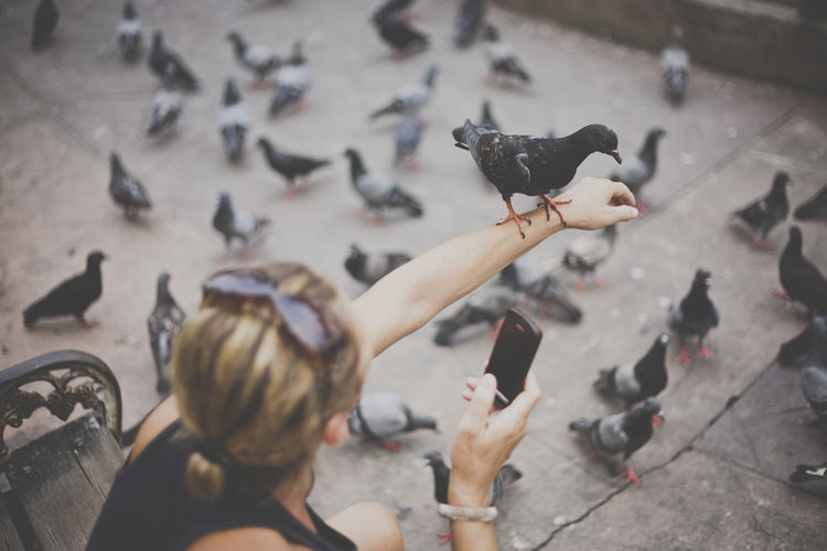 a pigeon takes a rest on a woman's arm Animal Animal Themes Animals In The Wild Avian Bird Day Flock Of Birds Flying Focus On Foreground High Angle View Perching Pigeon Pigeons Selective Focus Vertebrate Wildlife Zoology