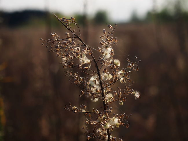 Beauty In Nature Close-up Day Field Flower Flowering Plant Focus On Foreground Fragility Freshness Growth Nature No People Outdoors Plant Selective Focus Sunlight Tranquility Tree Twig Vulnerability