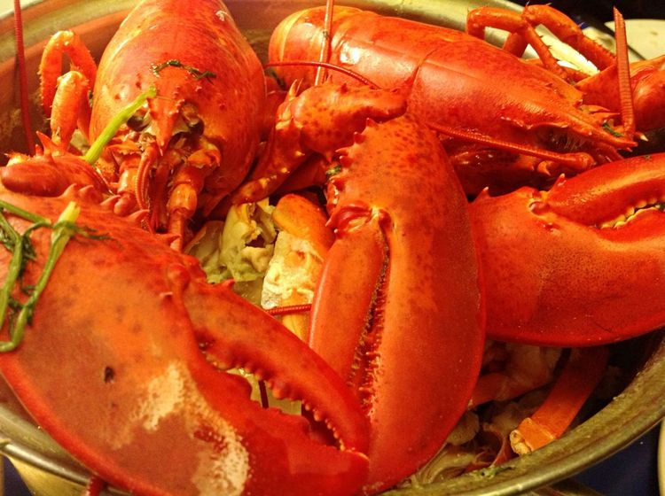 Yummy Maine lobsters fresh from Maine! Yummy In My Tummy!😋 East Coast Wonder's Food All Around The World!🌎