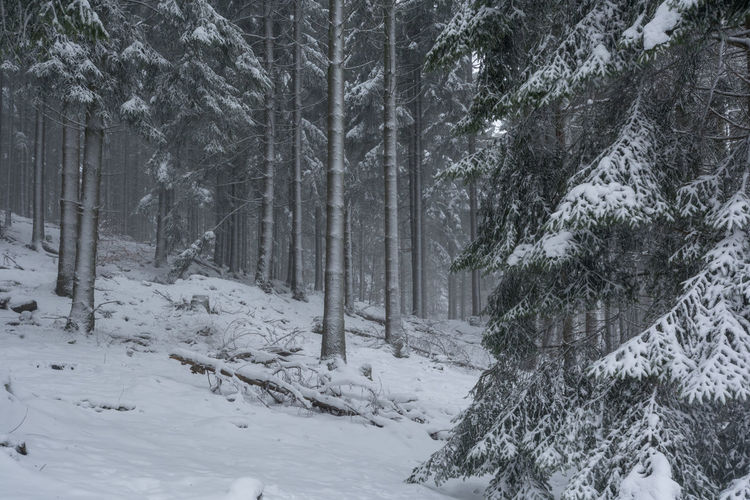 Winter im Nationalpark Hunsrück-Hochwald Beauty In Nature Cold Temperature Day Forest Nature No People Outdoors Scenics Snow Snowing Tranquility Tree Weather Winter