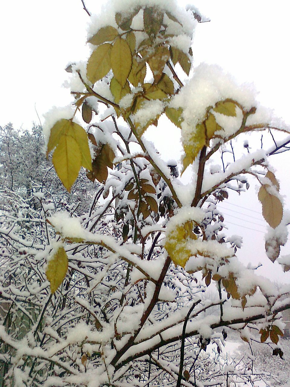 winter, snow, cold temperature, nature, weather, white color, beauty in nature, no people, frozen, flower, outdoors, growth, day, plant, ice, tree, fragility, close-up, freshness, sky