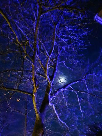 Dark night Tree Moon Perfectlight Vampire Full Frame No People Star - Space Outdoors