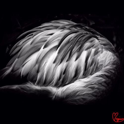 Beautiful Blackandwhite Photoyourworld