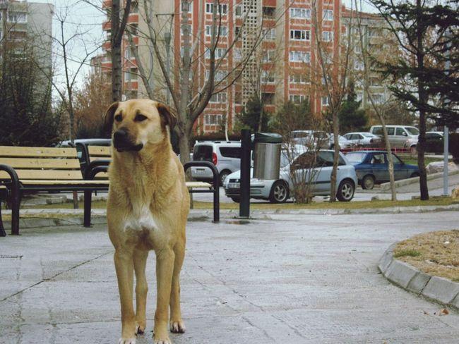 Dog Dog Life Dog Walking Dog Love