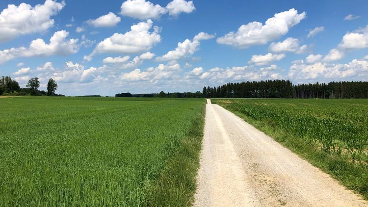 Cloud - Sky Sky Plant Green Color Field Environment Land Growth Landscape Beauty In Nature Tranquility Agriculture The Way Forward Tranquil Scene Rural Scene Grass Scenics - Nature No People Nature Day
