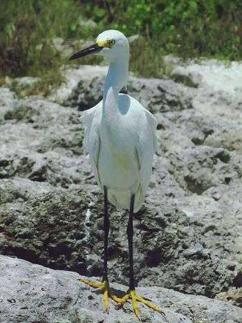 Birds Bird Watching Bonita Beach Florida