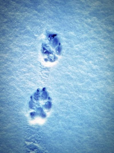 Dog Paw Tracks Blue No People Jellyfish Day Indoors  Sea Life Close-up