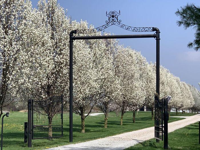 View of flowering trees on field