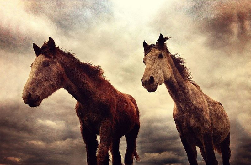 Two horses against clear sky