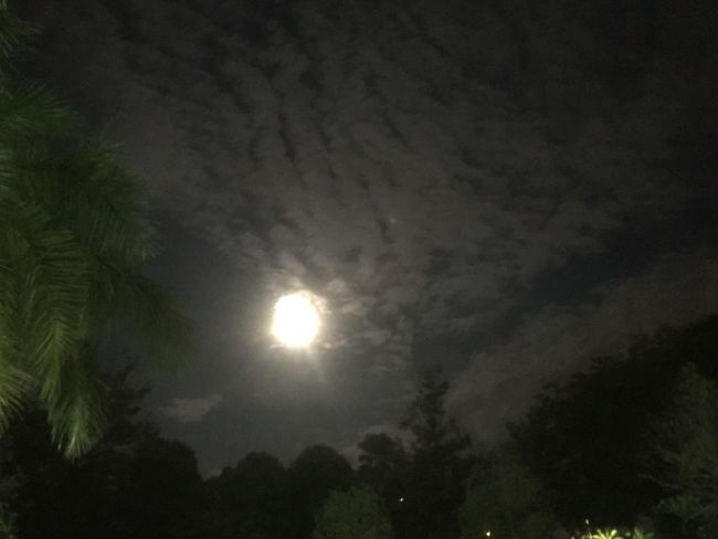 Bright moon Night Beauty In Nature Sky Tree Plant Low Angle View Tranquility Moon Nature Full Moon Moonlight Dark