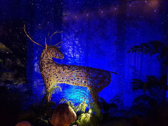 Dramatic Stag!