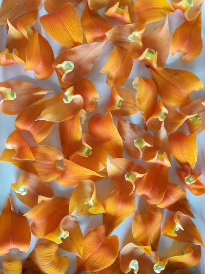 Backgrounds Beauty In Nature Close-up Day Flower Flower Head Fragility Freshness Full Frame Growth Nature No People Orange Wild Flowers Arrangement Outdoors Petal Tropical Orange Wild Flowers As Background