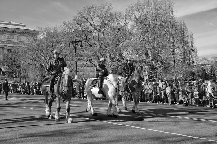 Monochrome Photography Albany New York Ny Capital Albany NY New York Capital Fujifilm Fujilove Fuji Xt10 Taking Photos Black & White Black And White Photography Blackandwhite Monochrome Parade Parade Horse Horse Police