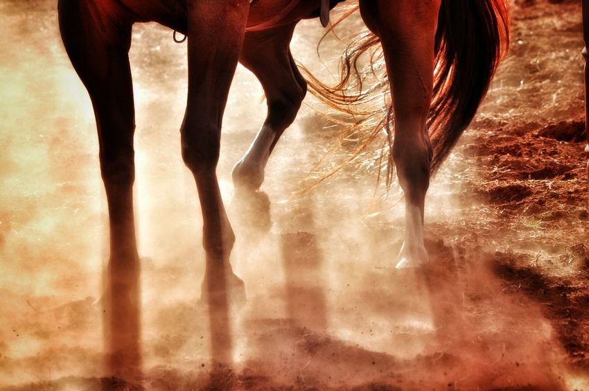 Cowboy Cowboys Rodeo Time Cowboy Up Rodeo! Rodeo Rodeo Scene Horses This Week On Eyeem Nikonphotography Horse Eye4photography  Fine Art Photography Photoart Bronte Texas Horse Riding Horselove Horselovers West Texas