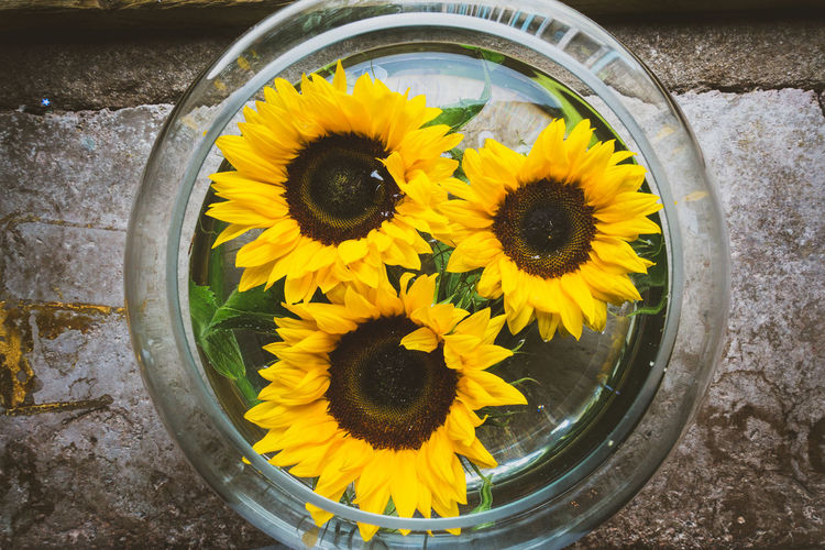 sunflowers in a