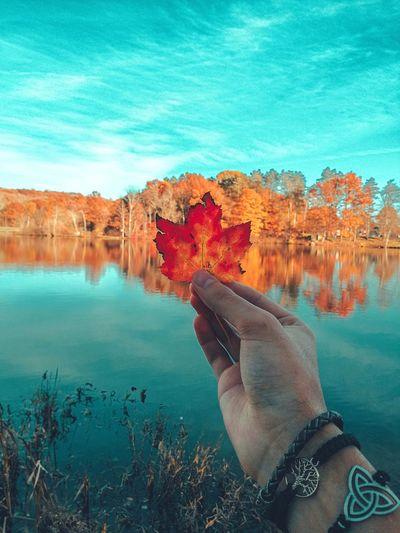Man holding autumn leaf in lake